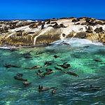 Republic of South Africa. Duiker Island