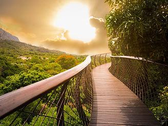 Tree Canopy Walkway (wooden bridge) in K