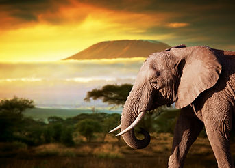 Elephant on savanna landscape background