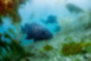 FishIdentification.jpg