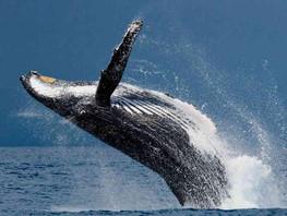 Viaje de buceo a Bahía Solano del 17 al 21 de septiembre 2021.