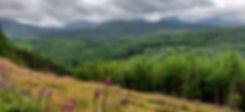 Coed Y Brenin Landscape.jpg