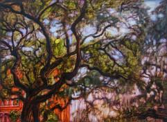 Savannah Canopy