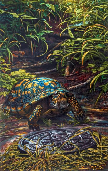 Turtle at Blue Ridge