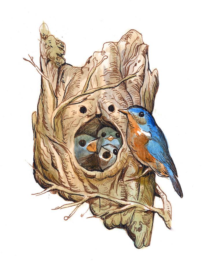 Bird 5.jpg