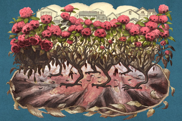 The Diseased Rhododendrons That Triggered a Federal Plant Hunt | New Republic