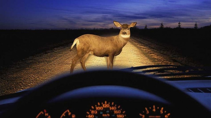 What are Your Chances of Hitting a Deer?