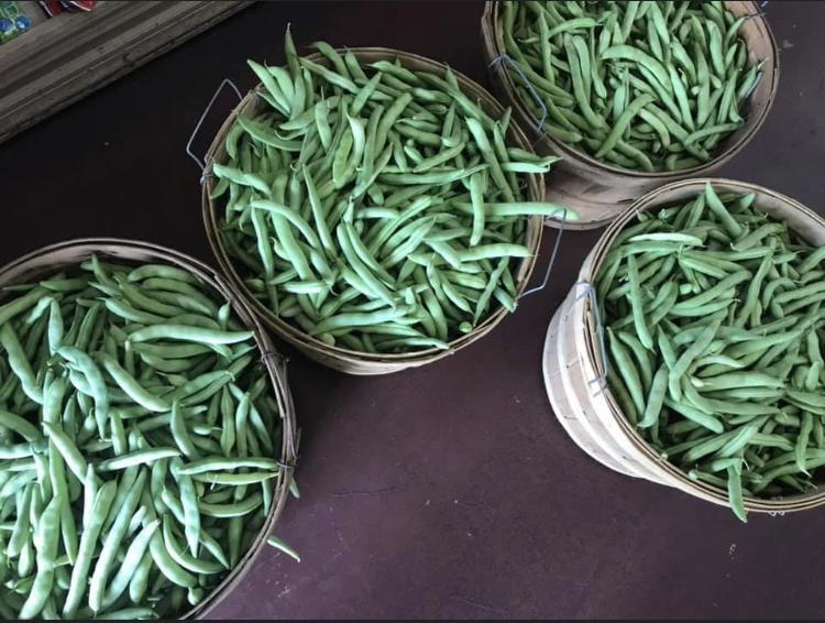 Half Runner beans