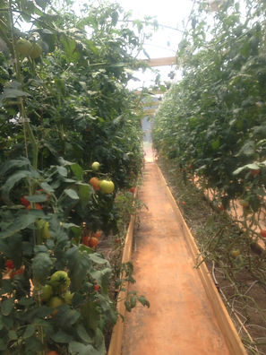 elijay farm 2.JPG
