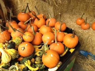 pie pumpkins,gourds