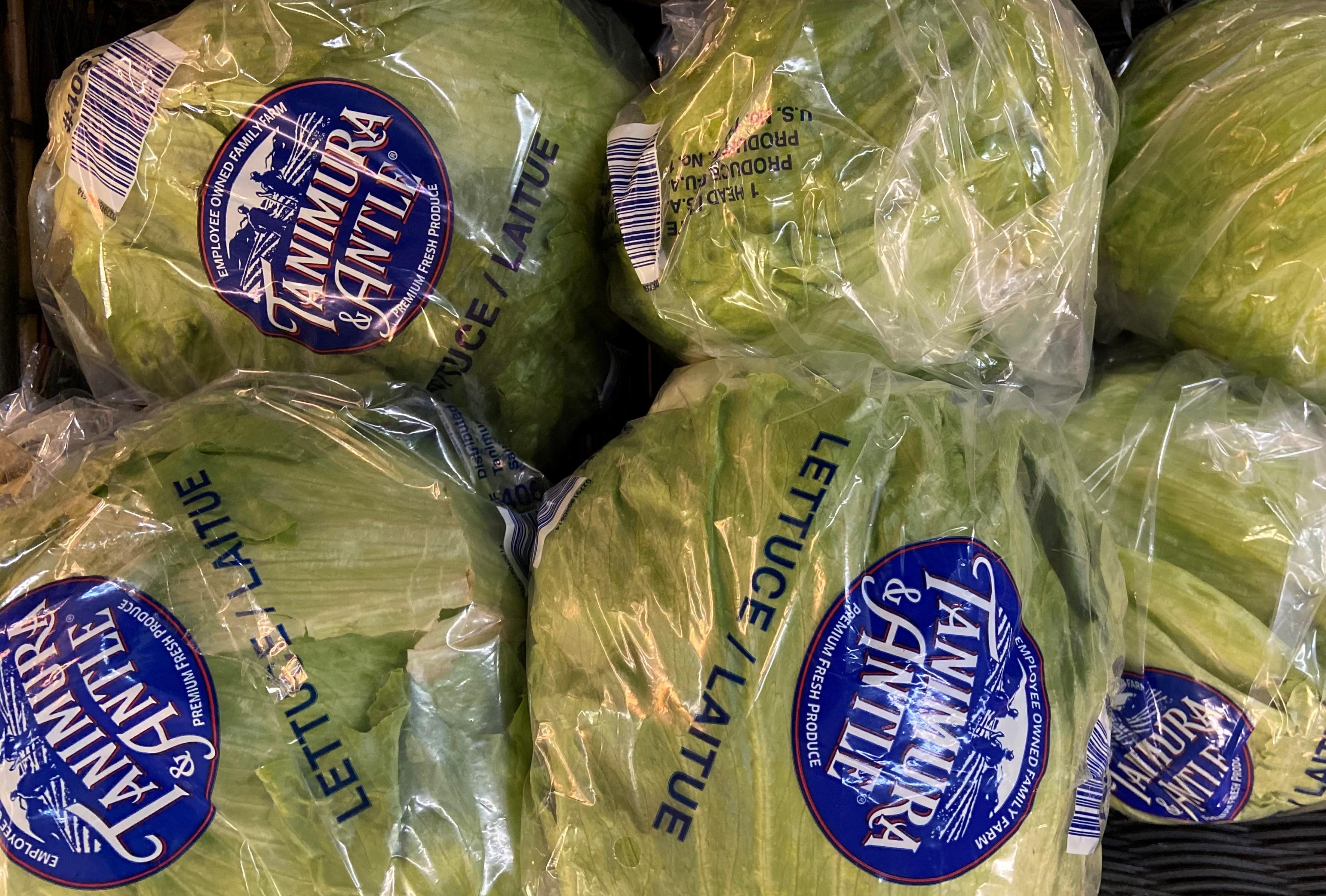 iceberg lettuce 2