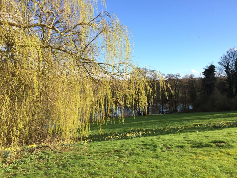 IMG_2439 lake and willow.JPG