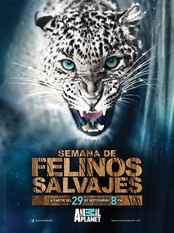 Felinos_MegacableBAJA.jpg
