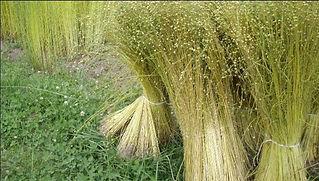 Cut flax