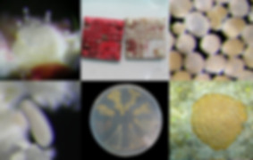 Marhaver Lab corals and gadgets