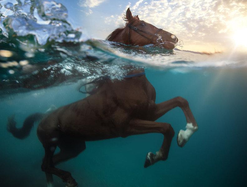Innføring nye hester
