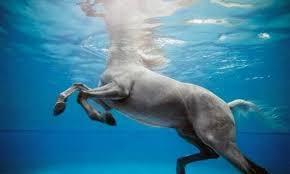Hestesvømming