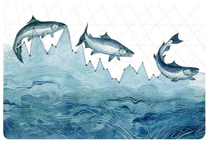 Salmon+Population+Decline+(watercolor).j