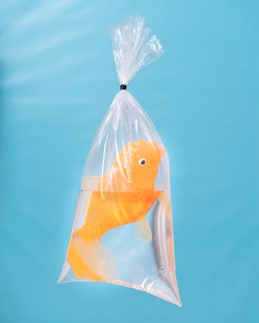 Freddy Koi Toy Goldfish in a Plastic Bag, 2020.