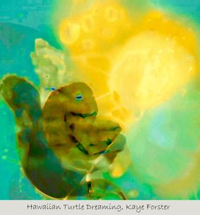 Hawaiian Turtle Dreaming
