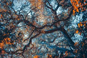 Nature's Nervous System