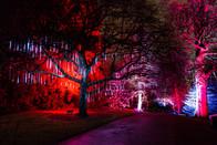 Christmas at the Botanics 2017
