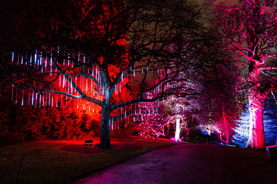 Christmas at the Botanics 2017