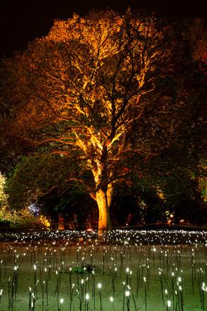Meadow of Light