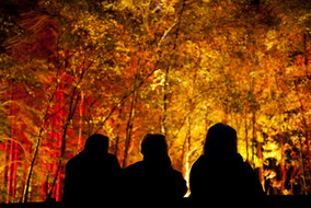 The Enchanted Forest 2015