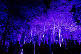 The Enchated Forest 2018
