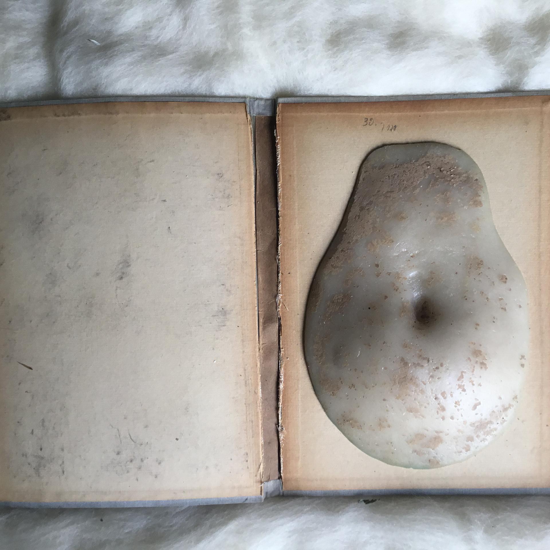 Bauchbuch