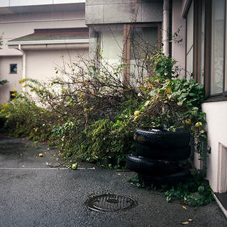 "Apple Tree, Okuna Resthome, 40""x40"", 2019, Digital Pigment Print, Okuna, Japan"