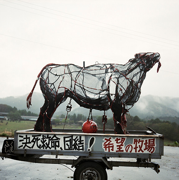 "Godzilla Cow A farmers protest, 40""x40"", 2019, Digital Pigment Print, Namie, Japan"