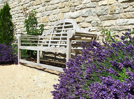 Lavender and a wooden bench