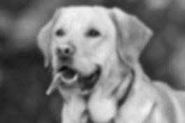 dog-1210559_1920_edited.jpg