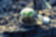 bright-bulb-close-up-1108572.jpg