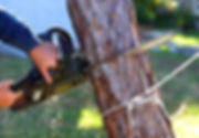 Tree Removal - Stewartstwon, York, Fawn Grove, PA, Sparks, Towson, Bel Air, MD