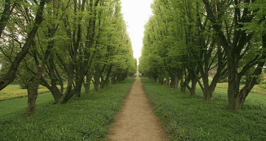 Tree Lined Path_edited.jpg