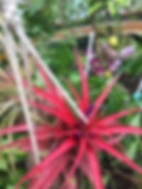 fleur sans terre serre dome
