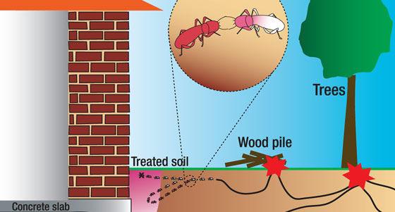 Termite Barrier Per L/M