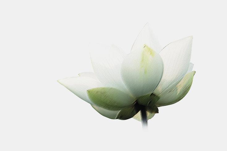 Lotus%20flower%20copy_edited.jpg