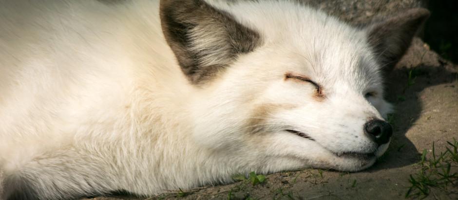Sleep, Pain and Yoga