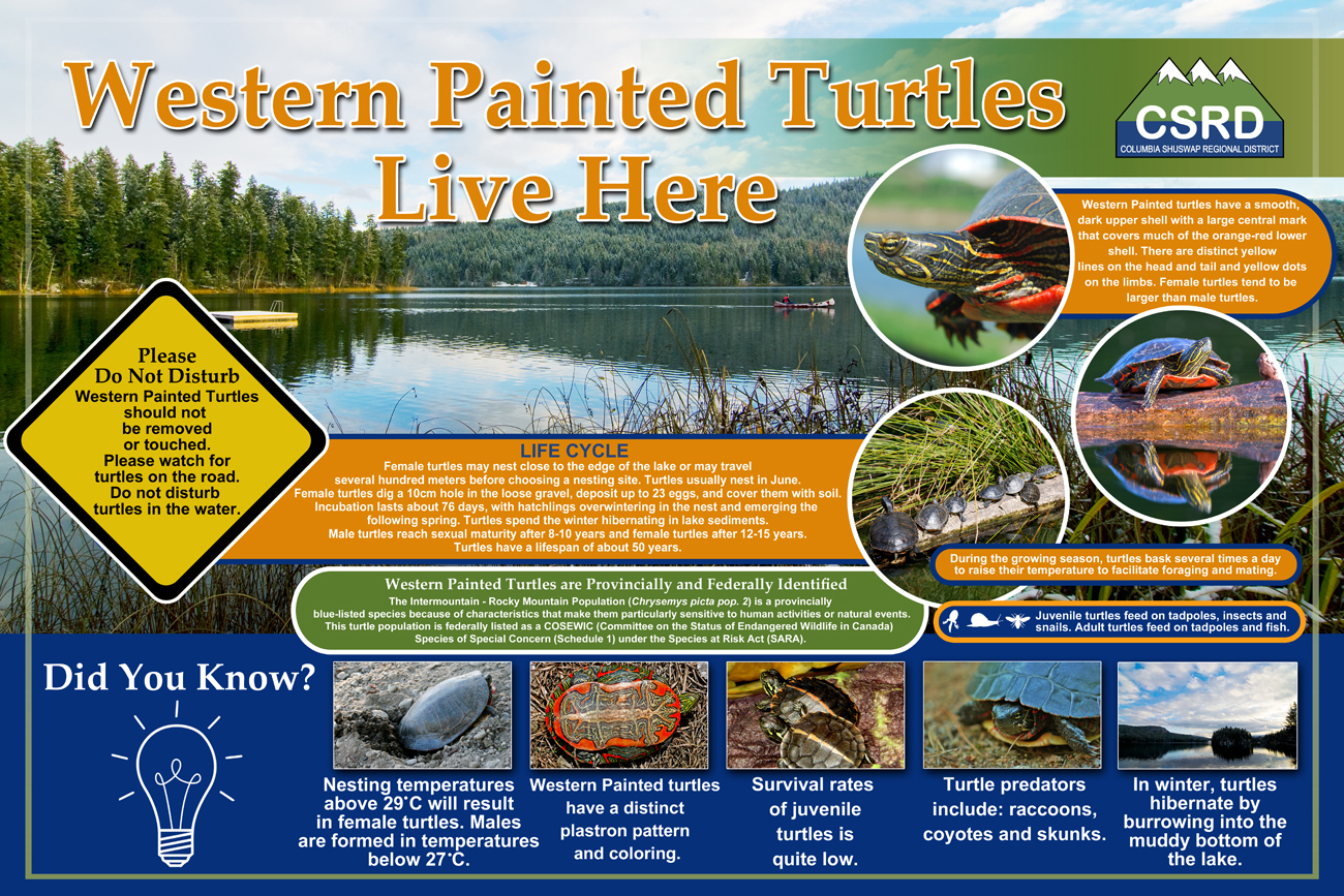 Western Painted Turtles sign