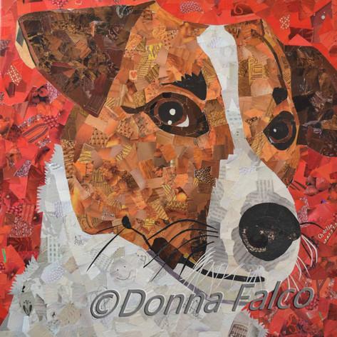 Charlie - Jack Russell Terrier