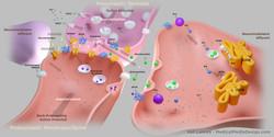 Vali Lancea Synapse