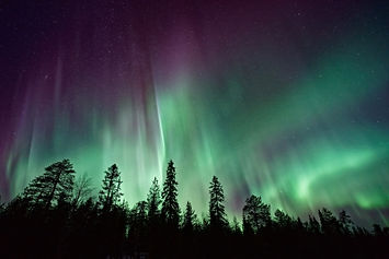 The northen lights over a forest