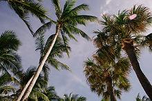 Tropical%20trees_edited.jpg