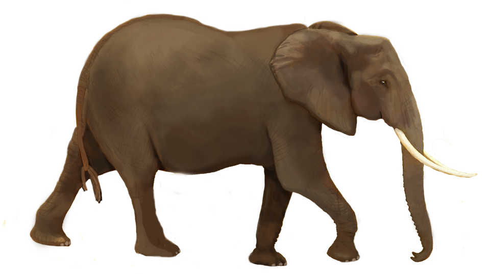 elephantsavanna-175AKgp9137dn3.png