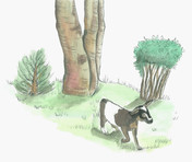 goat20.jpg