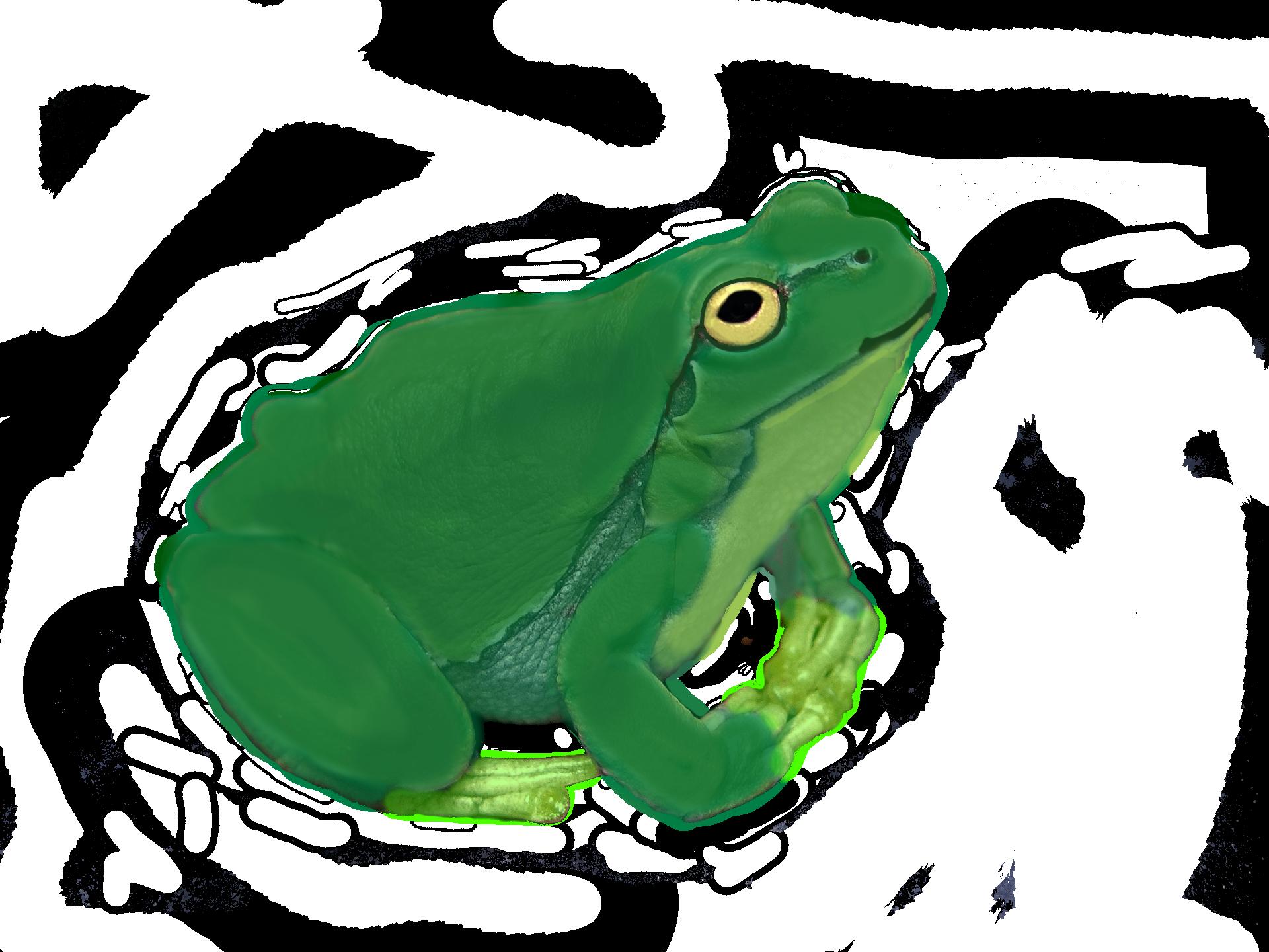 abcfrog-aa